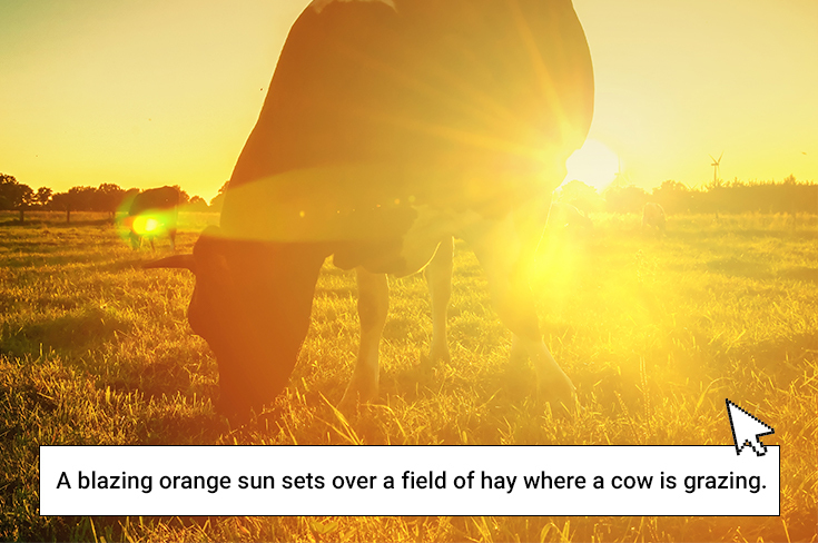 A blazing orange sun sets over a field of hay where two cows are grazing